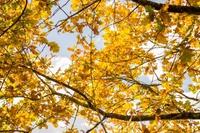 Warum soll nicht nach einem verregneten September ein goldener Oktober folgen?